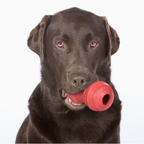 Dog Rubber Toy
