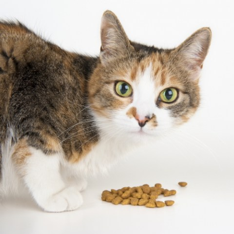 Dry Cat Food Category Image