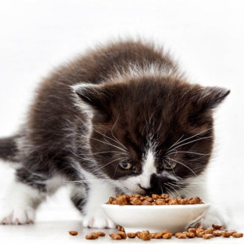 Kitten Food Category Image